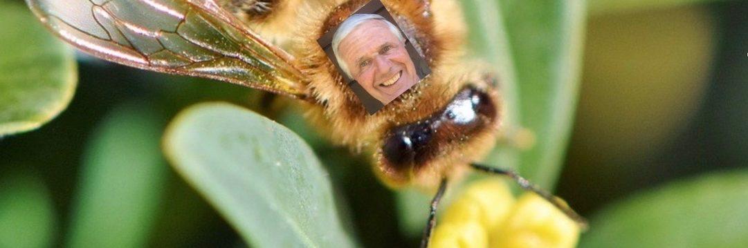 L'abeille sauvage